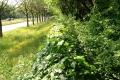 046-kokowall-noise-barrier-Lelystad